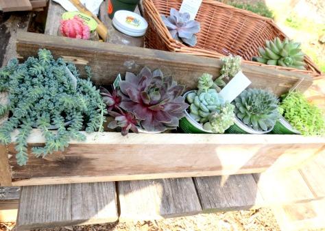 DIY Succulent Crate