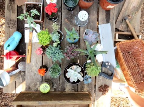 (Incomplete) Photo Encyclopedia of Succulents